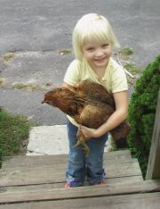 Don't Cluck With My Heart: The Legality Of Keeping Chickens As Pets