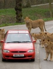 Bought a Zoo? Time to Learn About Strict Liability