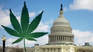 dc marijuana laws