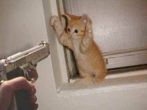 Cat Stakeup