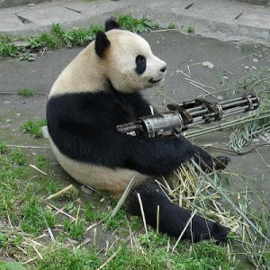 Panda with a gun